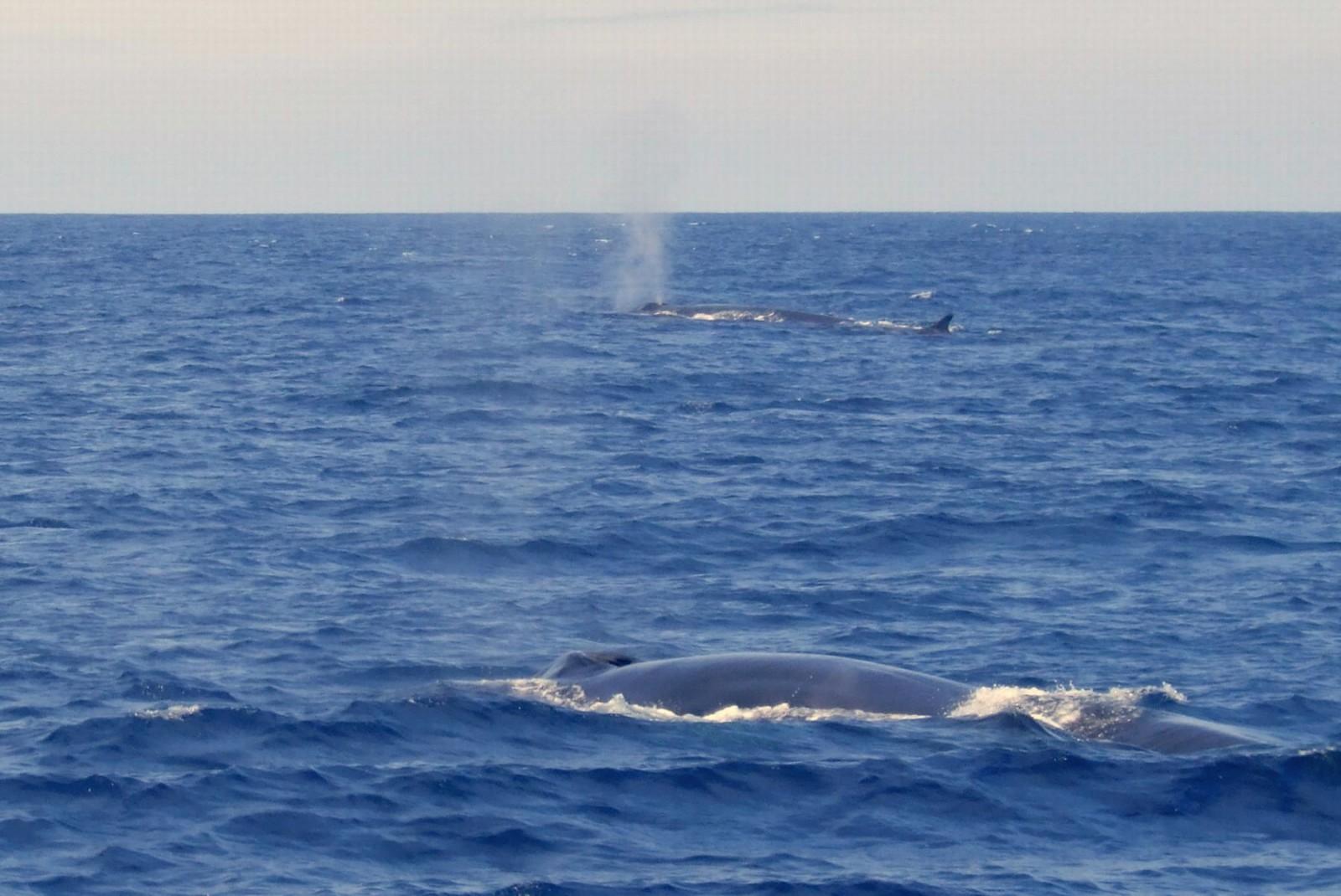 Wale Golf von Biskaya