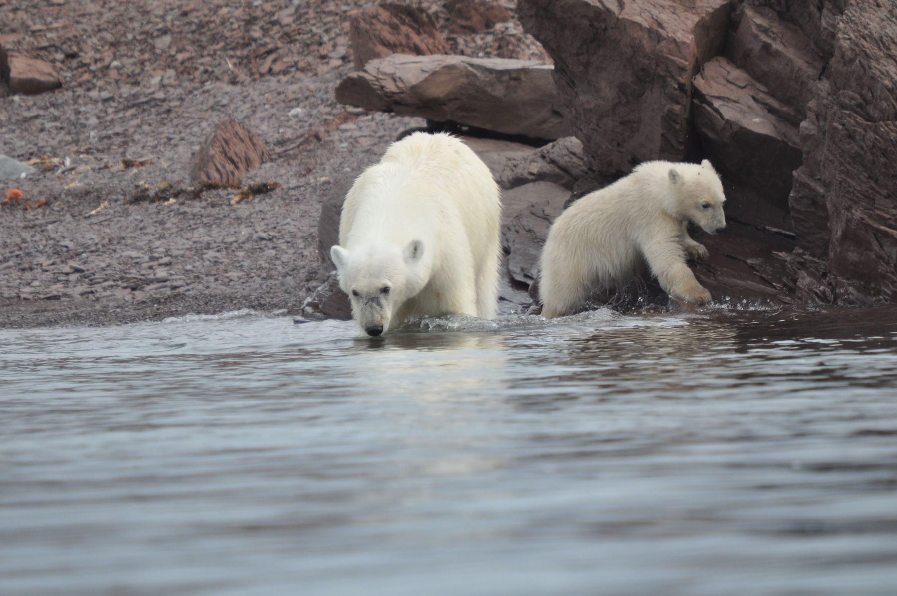 Spitzbergen mit Anne-Margaretha Eisbären