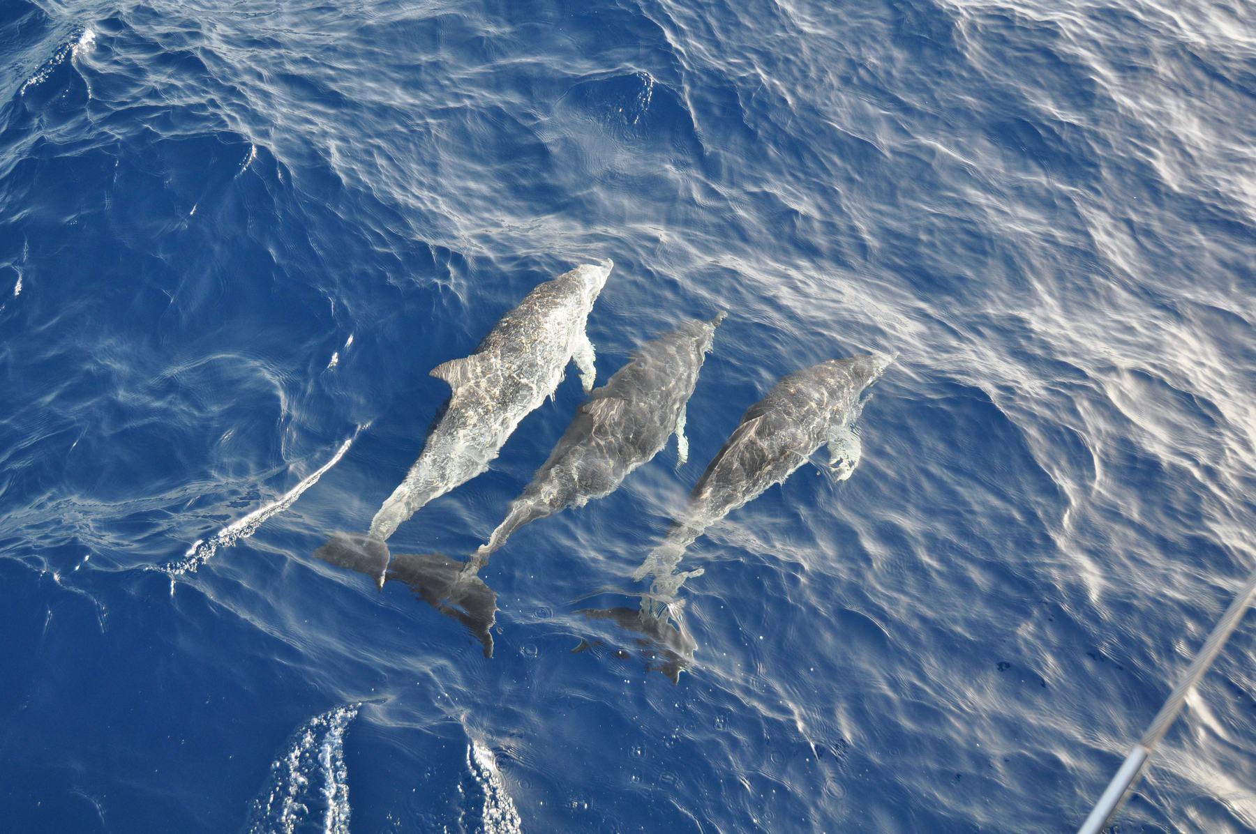 segeln bei den Kap Verde