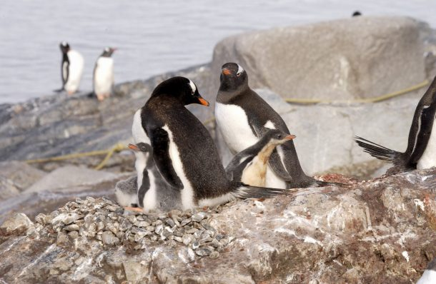 penguins-port-lockroy-antarctica