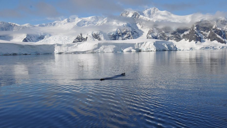 whales-in-antarctica-next-to-anne-margaretha